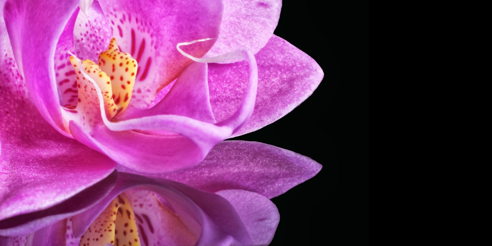 Orchid-flower-image-BG-wallpaper-for-edit-quotes-sayings-wishes-greetings-5696x2848.jpg