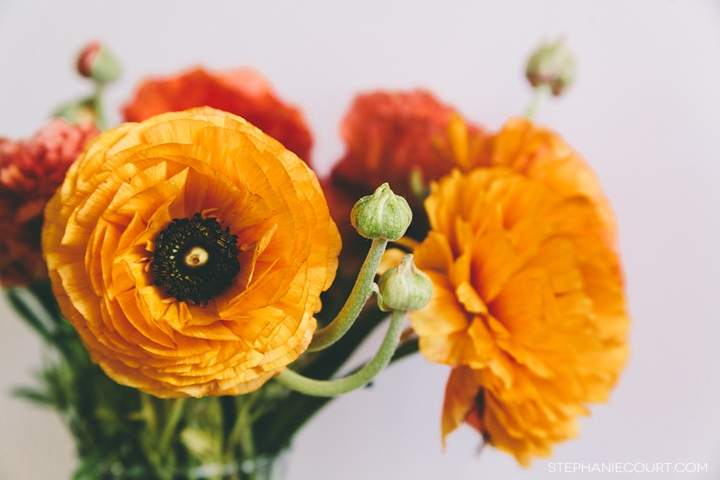 """yellow ranunculus"""