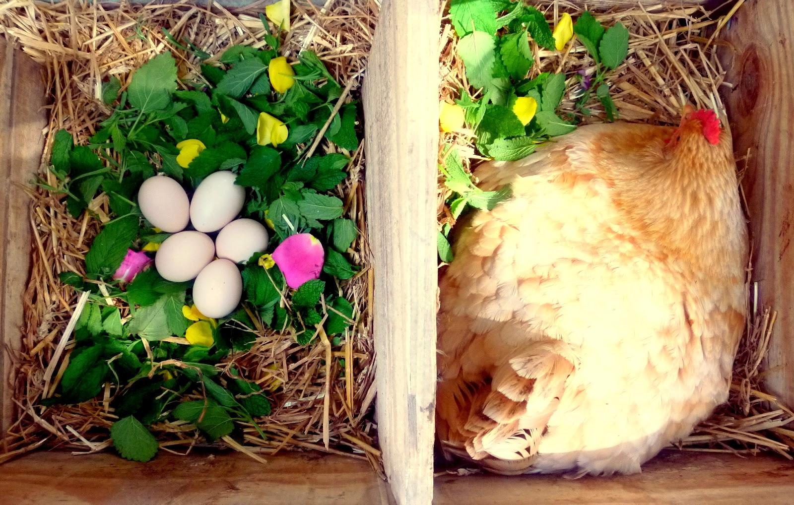 Гнёзда для куриц своими руками фото 413
