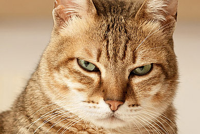 Τοξόπλασμα και εγκυμοσύνη: Εσείς ή η γάτα;
