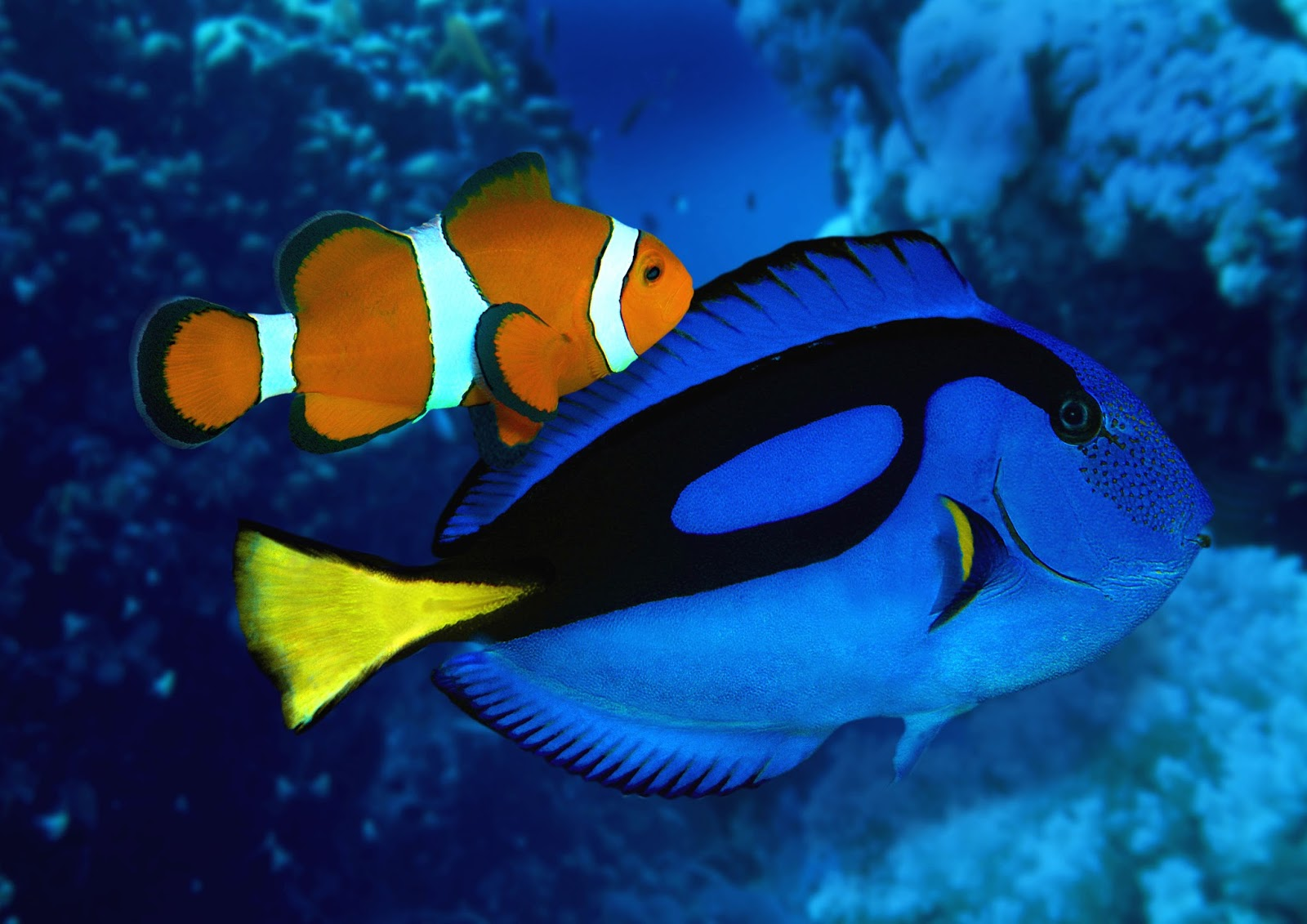 Catch nemo and dory at the sea life centre this half term for Finding dory fish tank