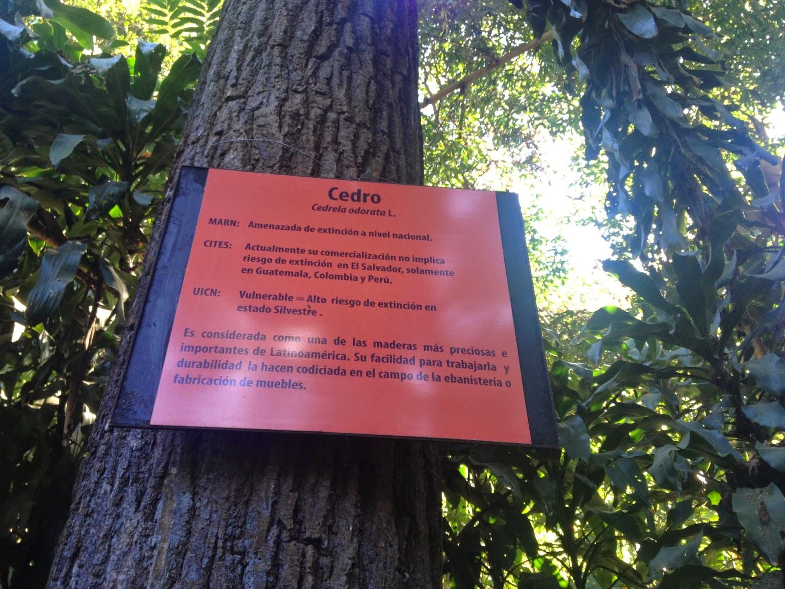 Imagenes jard n bot nico la laguna antiguo cuscatl n for Plantas de un jardin botanico