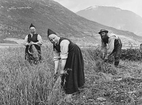 Norwegian Village Girls Harvesting Oats