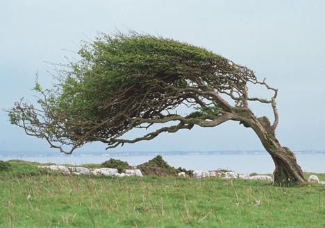 Image result for vind