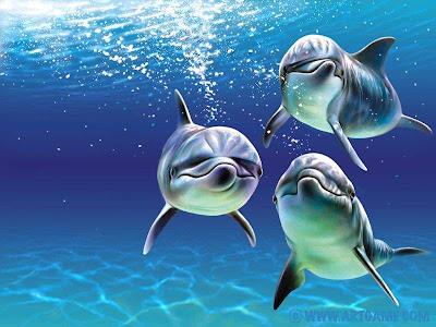 Delfines Imagenes y Fotos de delfines...