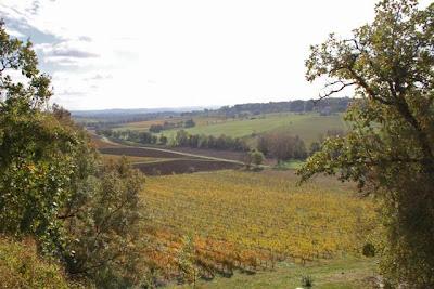 Viñedos de Le Château de Salettes. Blog Esteban Capdevila