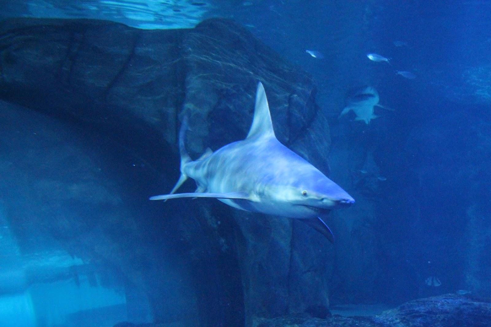 Wife On A Budget Newport Aquarium Newport Ky