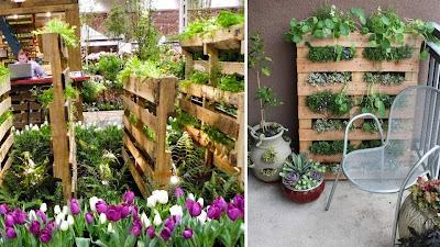 Horta vertical numa palete