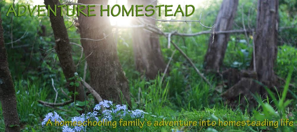 Adventure Homestead
