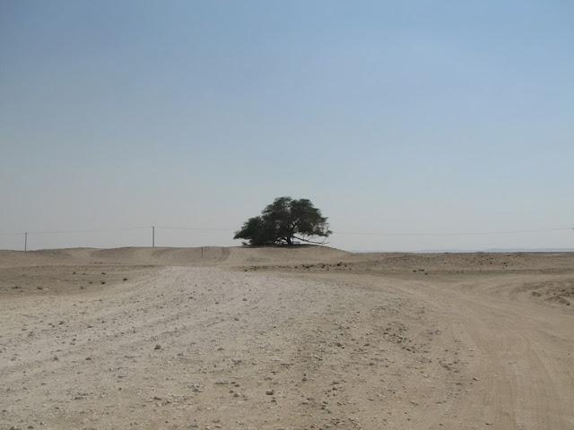El Árbol de la Vida: Una milagrosa supervivencia en el desierto