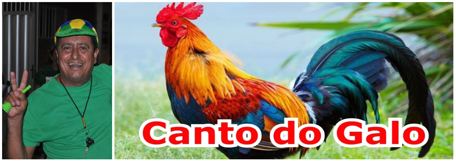 O CANTO DO GALO