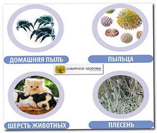 Сибирское Здоровье при аллергии