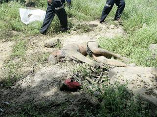 ช้างป่ารุมทำร้ายชาวบุรีรัมย์ ขณะไปหาของป่าดงใหญ่ โนนดินแดง ดับสยอง