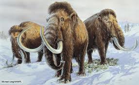 Woolly Mammoth pictures