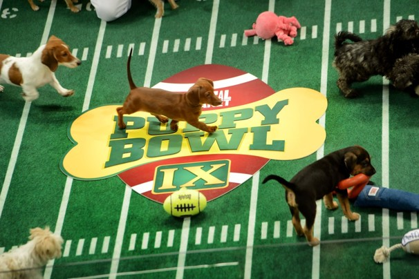 best puppybowl tweets