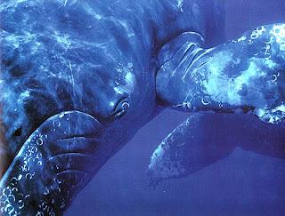 Глаз кита
