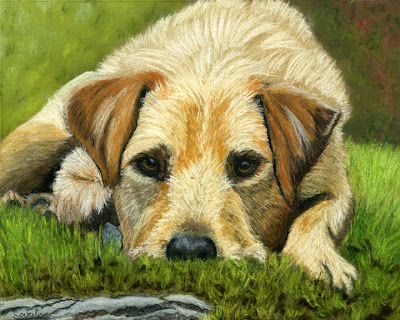Dog, Terrier, Crossbreed, Pet, Animal, Pet Portrait, Pastel Painting, Fine Art, For Sale