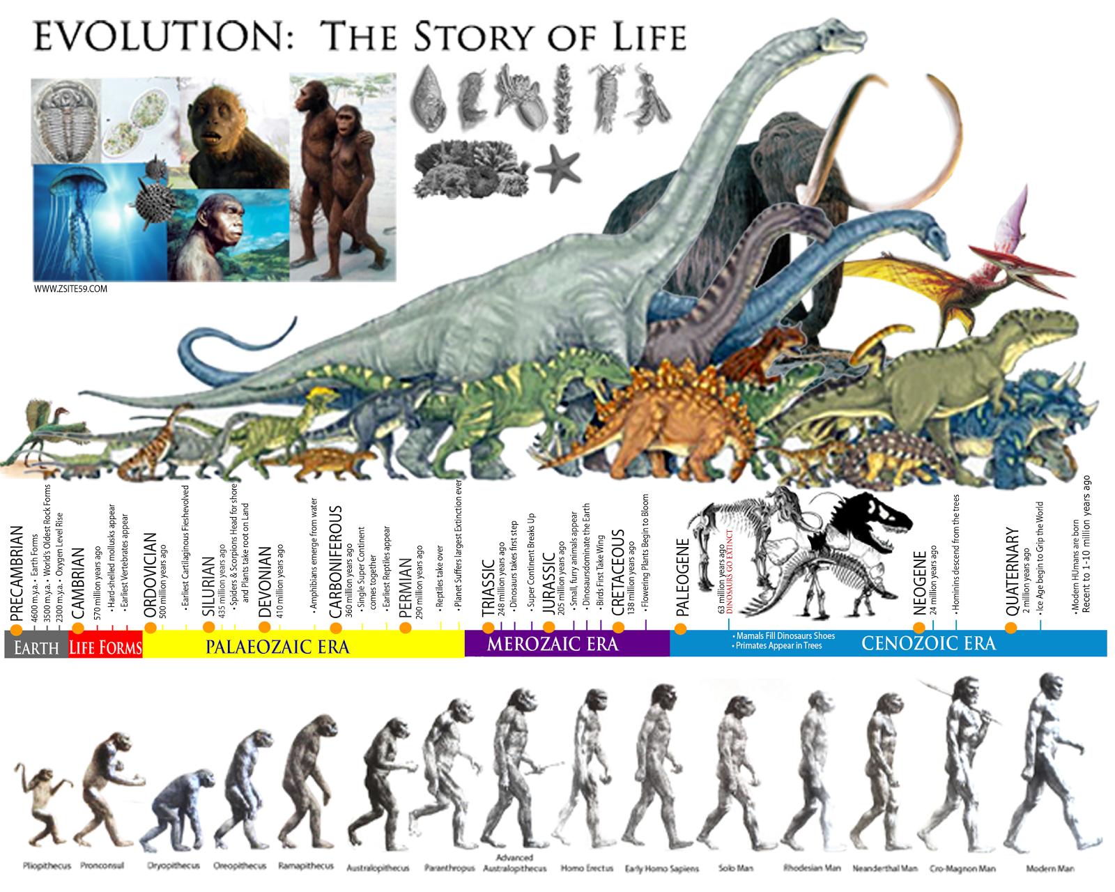 Lars krutak tatu lu tattoos from the dreamtime lars krutak - Evolution The Story Of Life Prehistoric Eras Dinosaur