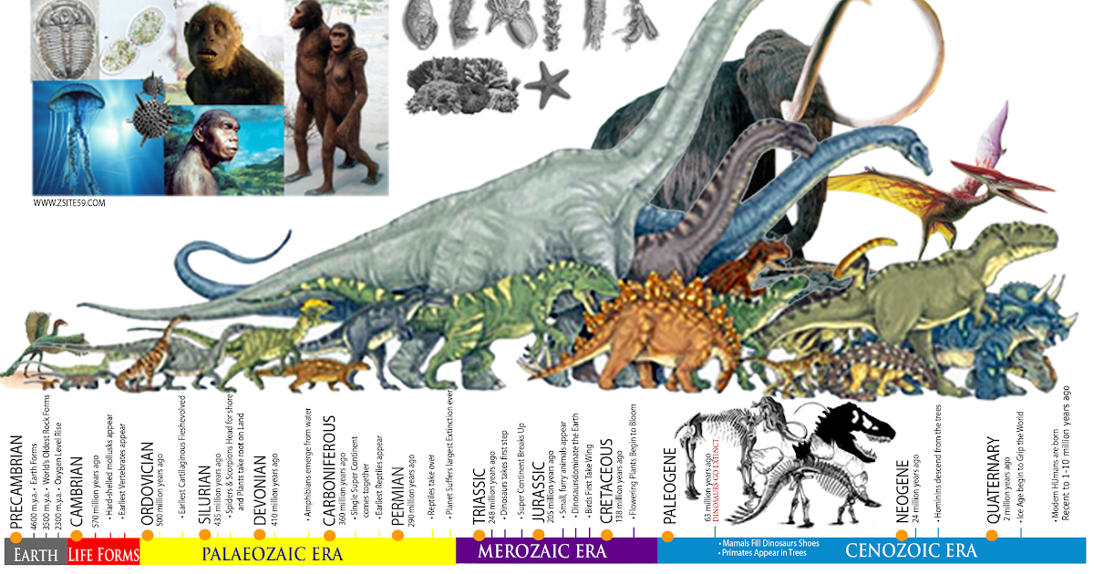 Zsite59: EVOLUTION: The Story of life │ The Prehistoric ERAS │ Dinosaur Timeline