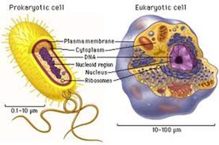 sel prokariotik dan sel eukariotik