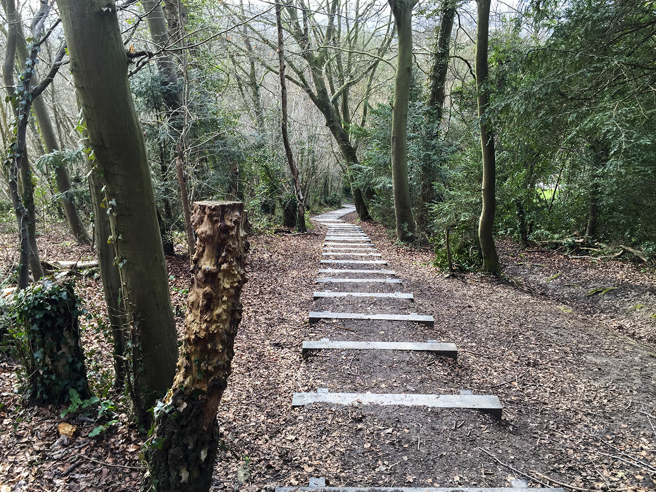 Trosley Country Park, steps down.  27 March 2015.