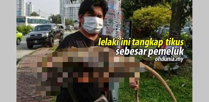 Gambar Tikus Sebesar Pemeluk Kini Jadi Bahan Viral Di Laman Sosial