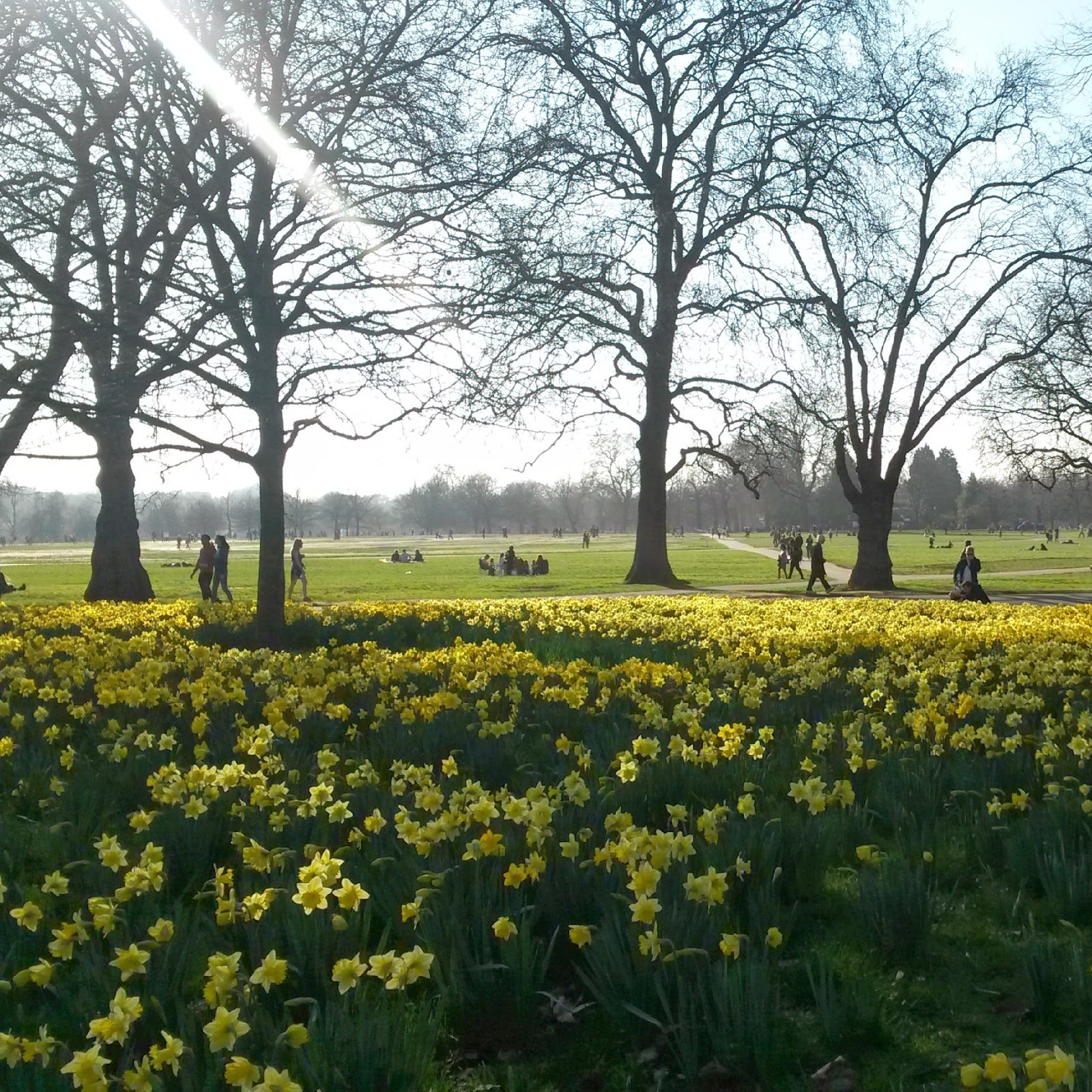Spring in Hyde Park, London