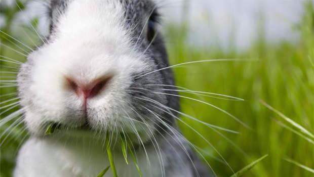 Cute rabbit
