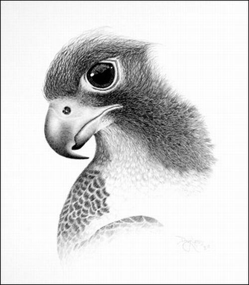 صور لوحات فنية روعه جنان مرسومة رسم بالفم بقلم الرصاص ولا اروع 67237.jpg