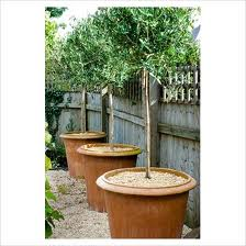 Frost Garden Pots Gardening airy fairies how to frost proof terracotta pots heres how to protect your pots which can be as tender and in need of tlc as your frost sensitive plants workwithnaturefo