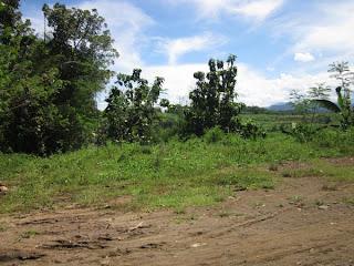 tanah murah magelang