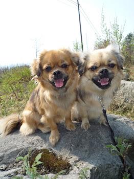 Daisy og Lilly