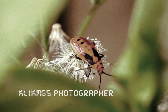 Macro Serangga - Banyumas Klikmg 5 Fotografi
