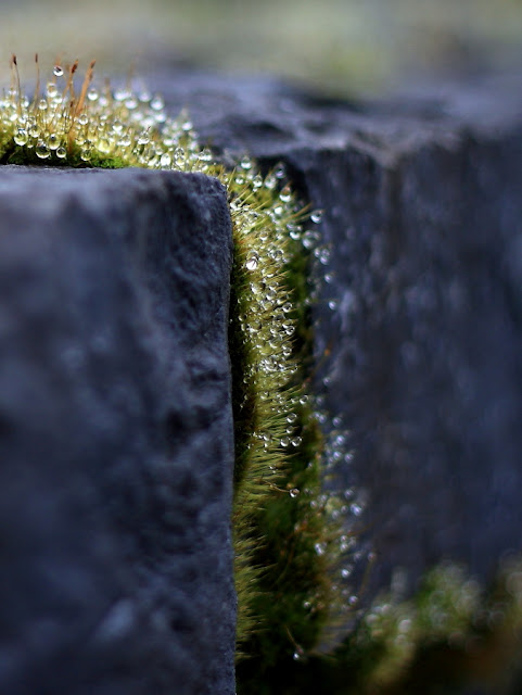 Annie Japaud Nature Photography, macros, moss, fantastic light, nature
