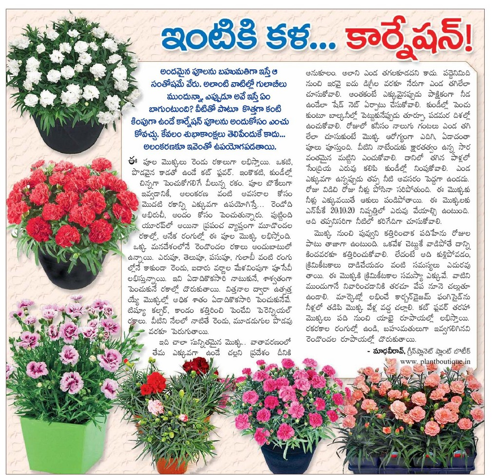 Telugu Home Tips: Home decoration ideas_Home Tips_Home Gardening and ...