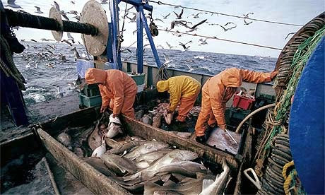 http://www.theguardian.com/environment/2014/dec/16/fishing-quotas-defy-scientists-advice