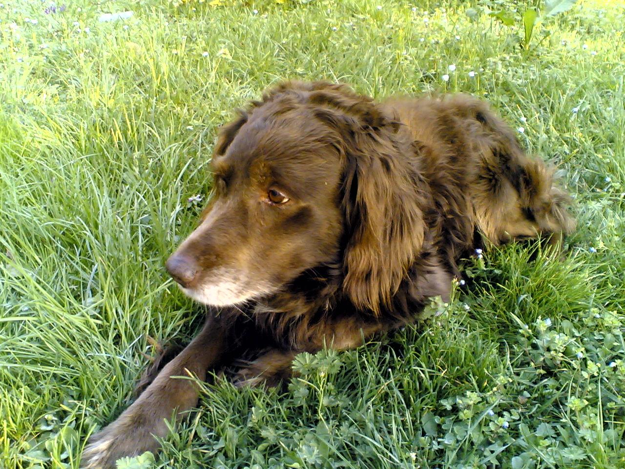 La piazza di delphine post adatto solo per chi ama i cani - Portare il cane al canile ...