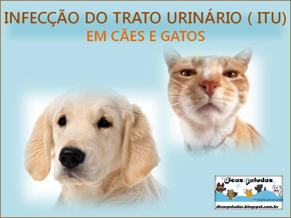 <b>Infecção</b> do <b>Trato Urinário</b> – ITU | Blog da Lista Gatos 2014