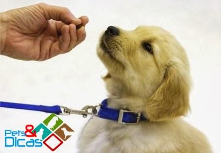 como controlar um cachorro filhote