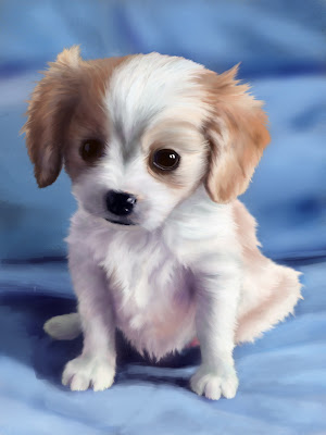 Photoshop study puppy digital painting animal