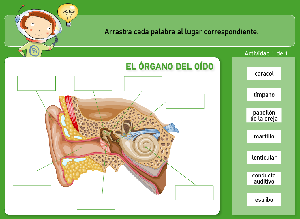 http://www.primerodecarlos.com/TERCERO_PRIMARIA/archivos/actividades_natura_tercero/5/2.swf