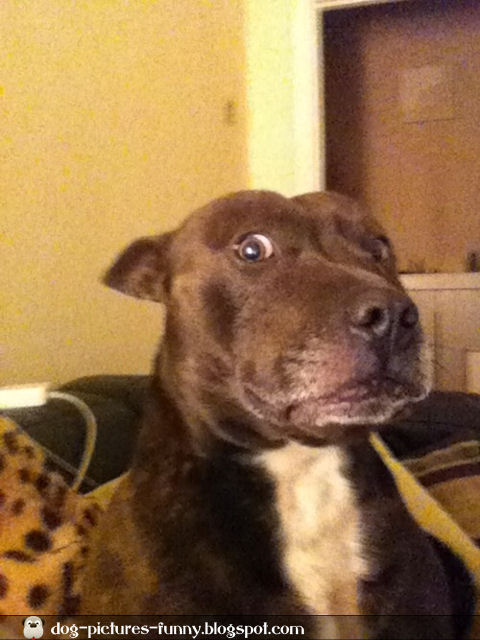 Image result for shocked dog face