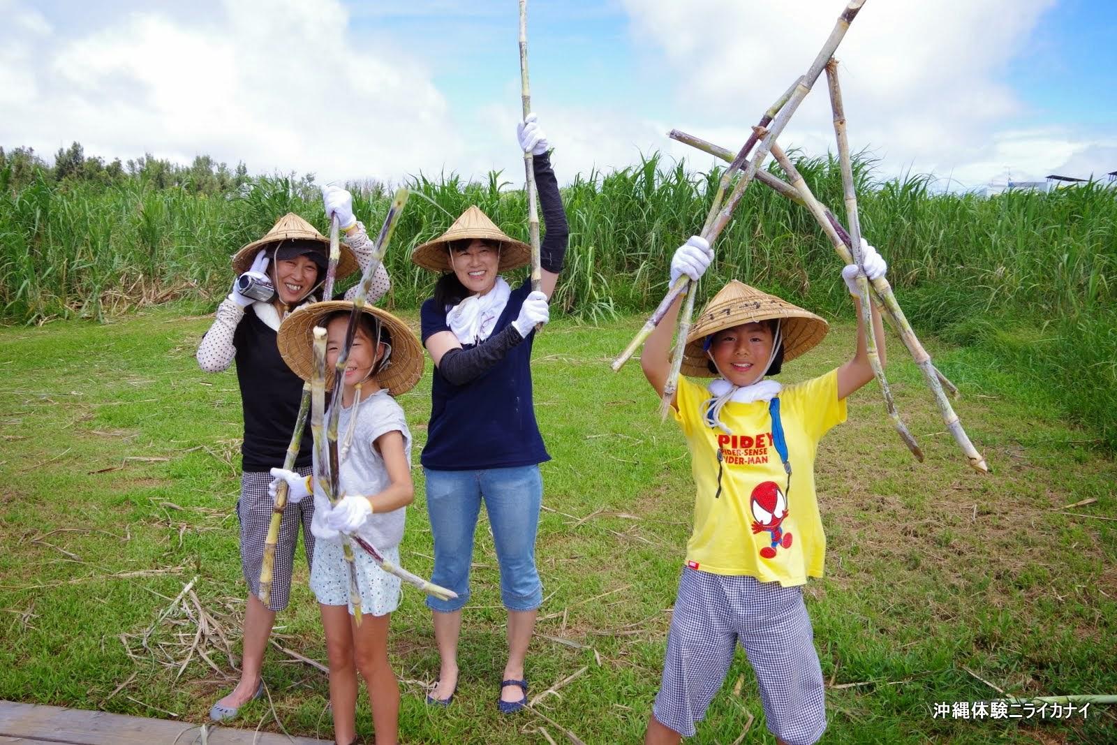 体験/観光 サトウキビ 収穫 黒糖 夏休み 宿題 自由研究