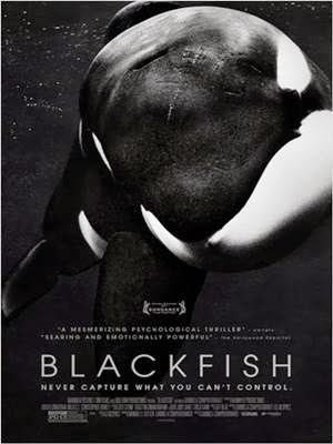 Download Blackfish Fúria Animal BDRip Dublado Torrent
