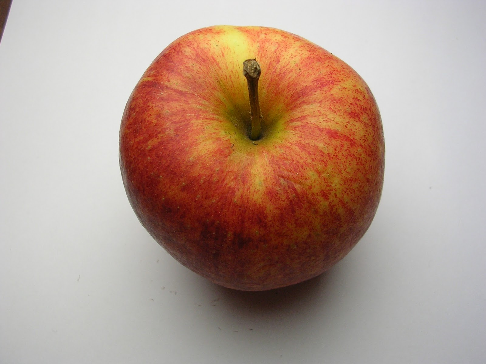 apfelbaum elstar apples