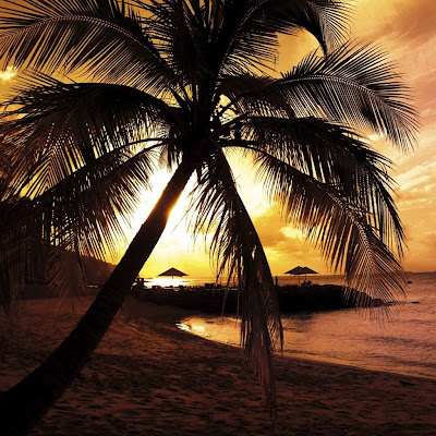 Palm sunset download free wallpapers for Apple iPad