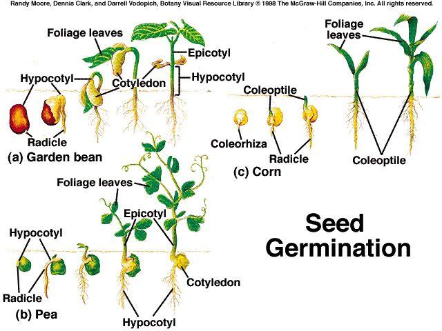 Guide For Hydroponics Farming