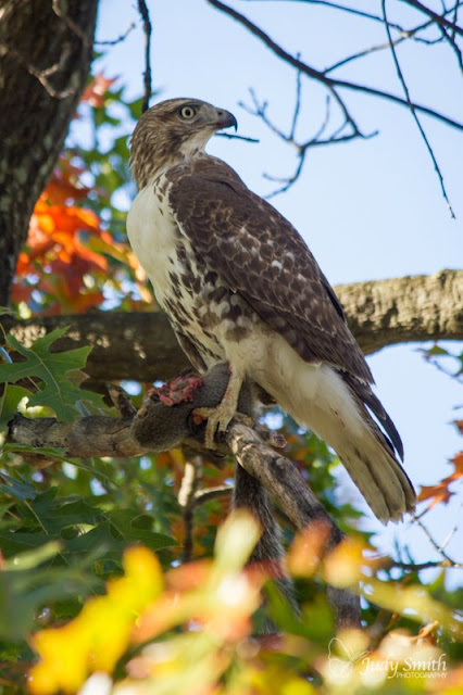 Hawk Luncheon, Judy P Smith Photography