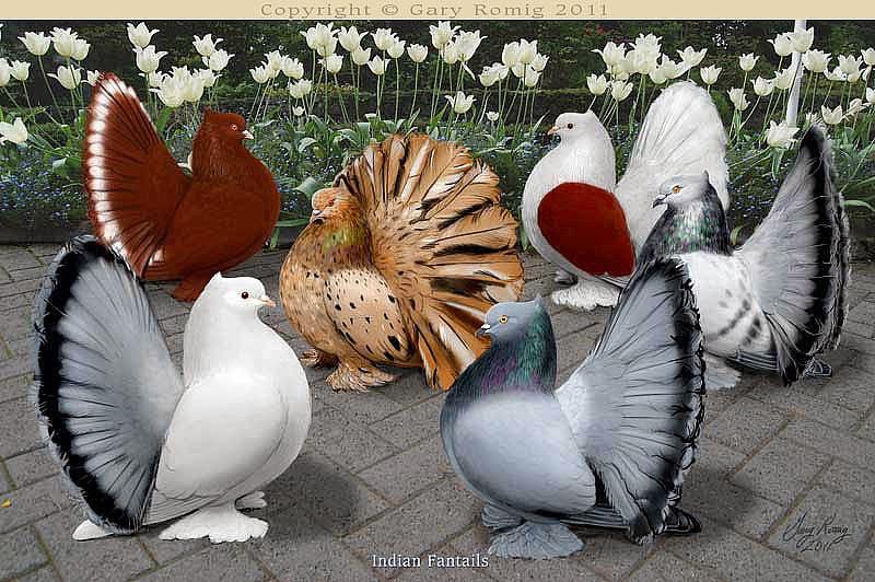 Самые дорогие голуби