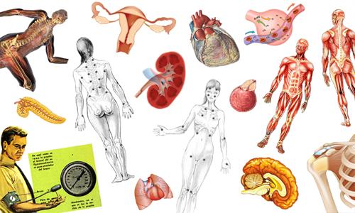 fisiología se encarga de estudiar las interacciones de los elementos ...